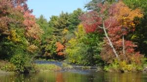 autumn leaves (4)