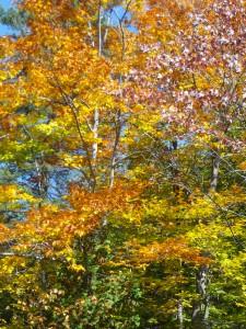 Autumn Leaves - St Jerome Park