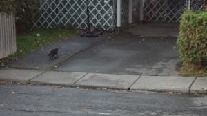 black cat on the run