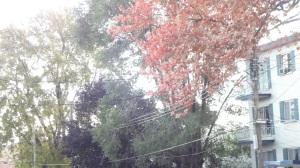 windy leaves falling
