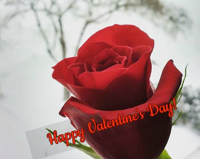 Question Tuesday – A Funny Take on Valentine's Day